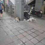 タイ狂犬病