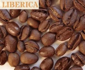 レベリカコーヒー